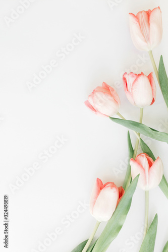 Spring flat lay. Pink tulips border on white background, space for text. Stylish soft spring image. Floral Greeting card mockup. Happy women's day. Happy Mothers day. Creative vertical photo Wall mural