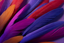 Bright Exotic Bird Wing, Feathers, Colorful Background