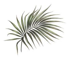 Palm Leaf Illustration Isolate...