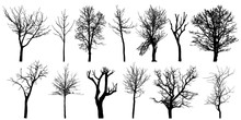 Set Of Autumn Bare Trees, Silhouettes. Vector Illustration.