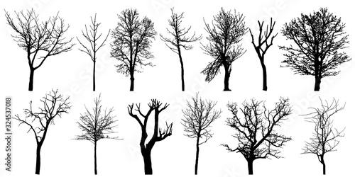 Valokuva Set of autumn bare trees, silhouettes. Vector illustration.