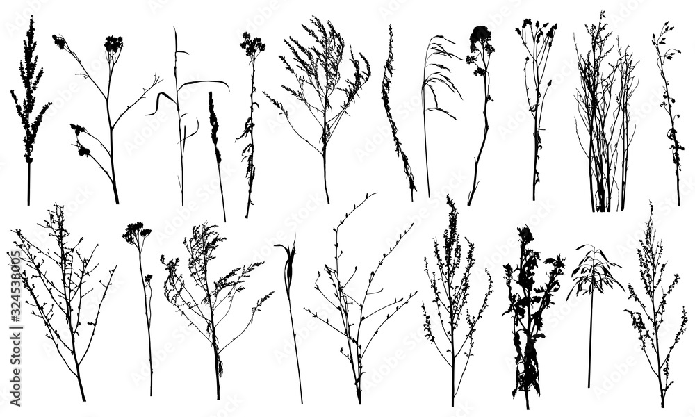 Fototapeta Collection of wild plants and weeds, silhouettes. Vector illustration.