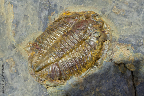 Arthropod fossil. Ordovician Era Canvas Print