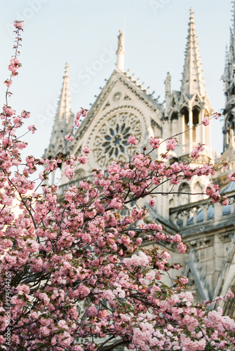 Fotografia Notre Dame with Cherry Blossoms