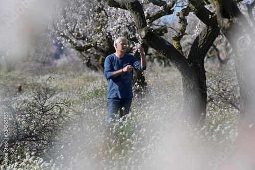 Fototapeta farmer man in an apple field obraz