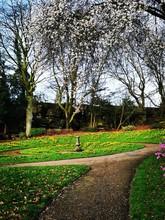 Park In Spring. Avenham And Mi...