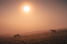 Horses Grassing Together In Autumn Summer Morning, Calm, Nostalgic Mood, Edit Space.