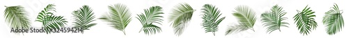 Fototapeta Set of tropical leaves on white background. Banner design obraz