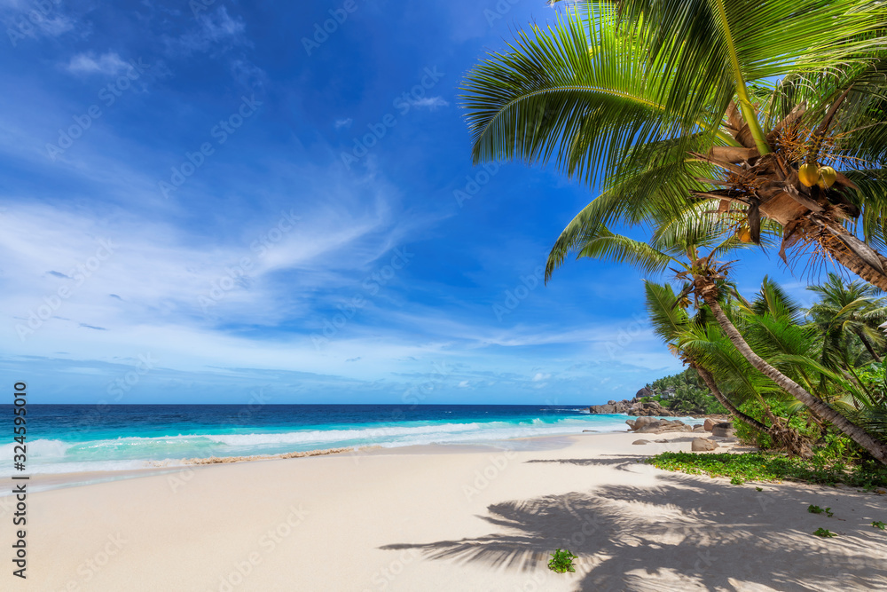 Fototapeta Tropical Beach. Sunny beach with coco palms and turquoise sea. Summer vacation and tropical beach concept.
