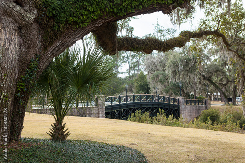 View of live oak trees and bridge in Palmetto Bluff near Bluffton, South Carolina, USA Wallpaper Mural