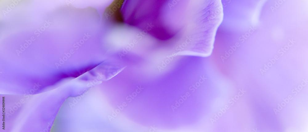 Fototapeta Macro d'un pétale de fleur mauve en format panoramique avec espace pour texte sur la droite