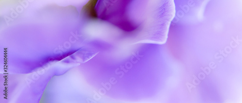 Macro d'un pétale de fleur mauve en format panoramique avec espace pour texte sur la droite