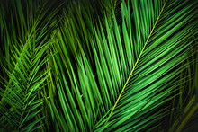 Tropical Palm Leaves, Jungle L...