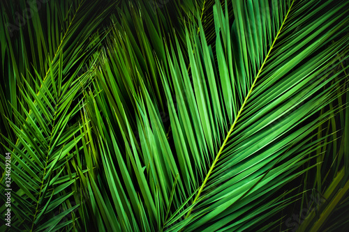 Obraz tropical palm leaves, jungle leaf floral background - fototapety do salonu