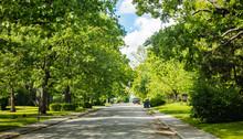 Empty Street Under Green Trees...