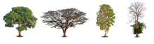 Collection Four Big Tree At White Background