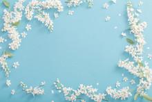 Bird Cherry Flowers On Paper B...