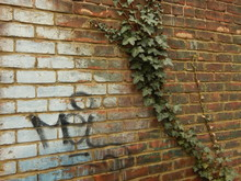 Graffiti And Poison Ivy