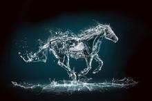Horse Rearing Up On White Back...