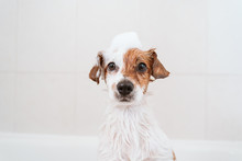 Cute Lovely Small Dog Wet In B...