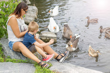 Mother And Her Child Feed The Geese In The Pond