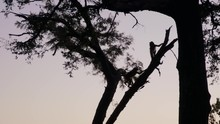 Silhouette Of Monkeys Playing ...