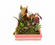 Miniature Container Fairy Garden With Live Plants.