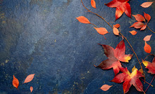 Fall Red Leaves On Blue Background. Top View