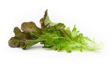 Red Oak Lettuce Isolated On Wh...