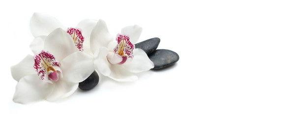 beautiful white orchids isolated on white background with black pebbles
