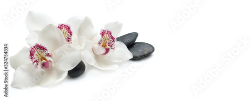 Fototapeta beautiful white orchids isolated on  white background with black pebbles obraz