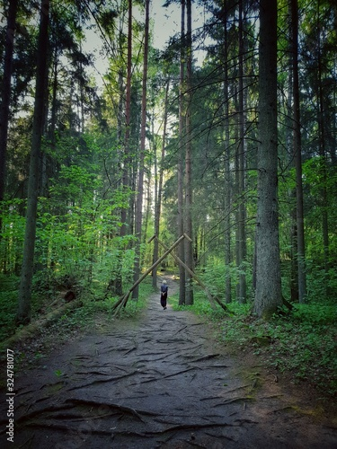 Forest with tall trees during daytime