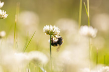 A Bee Hanging Precariously Und...