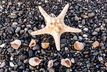 Starfish And Shells Lie On The...
