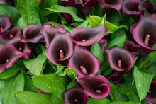 Bouquet Of Multicolored Calla ...