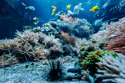 Fotografia Colorful underwater offshore rocky reef with coral and sponges and small tropica