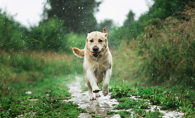 Funny dog playing under raindrops in countryside