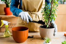 Cropped View Of Girl In Gloves Holding Small Shovel And Rake While Transplanting Plant