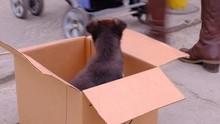 Puppy Dog On Sale: Little Dog ...