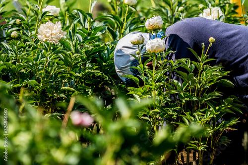 Photo 植木職人  Gardener 1