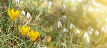 Spring Awakening - Green Meado...