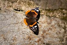 Papillon Sur Un Mur