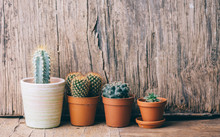 Springtime Plant Gardening Background. Flower Cactus And Succulent Houseplant In Pot On Wooden Table.