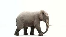 CG Render Of Walking Elephant....