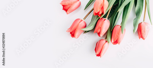 Fototapeta Pink tulips bouquet isolated on white background from above. Top view of red flower bud. Spring and easter greeting card design layout. obraz