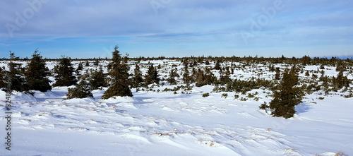 Fototapeta winter in karkonosze obraz