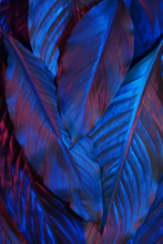 Blue And Red Neon Glowing Leav...