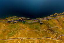 Aerial View Of Vineyards And Lake Geneva