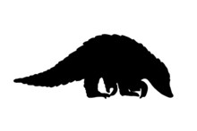 Pangolin Animal Black Isolated...