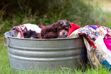 Puppies In A Bucket